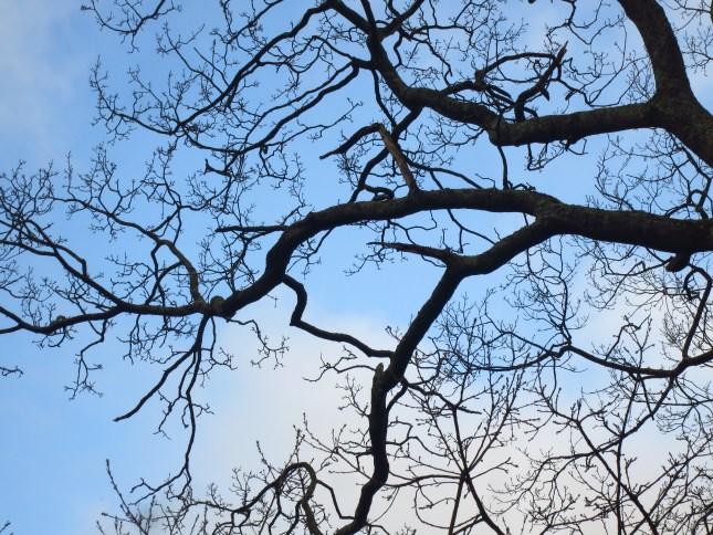 I love winter branches