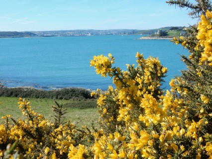Gorse and sea