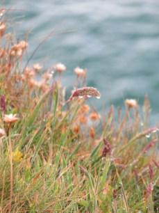Raindrops on grass