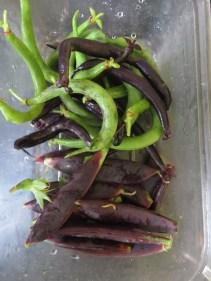 Dwarf Beans and Mangetout