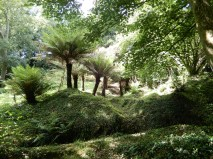 Treeferns
