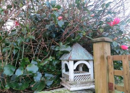 Bird house in the camellia bush
