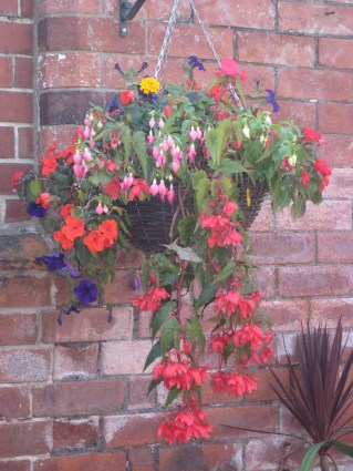 Another hanging basket