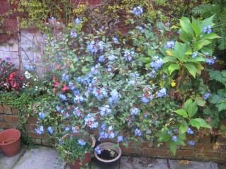 The retaining wall garden