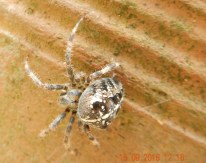 Unidentified spider
