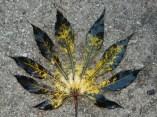 Fabulous leaf