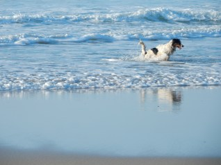 A happy dog playing in the waves