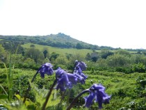 Carn Brea and Bluebells