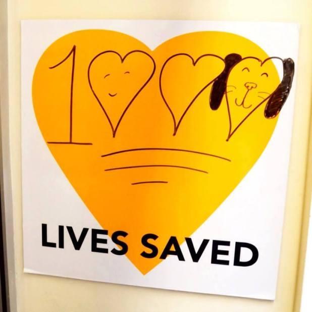 LA Love and Leashes 1000th adoption