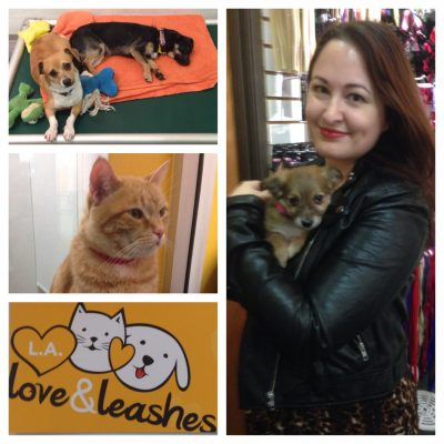 Excited to Announce my Board Membership at L.A. Love & Leashes!