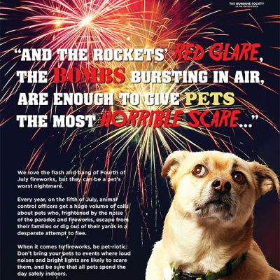 Keep Your Pets Safe on the 4th of July!