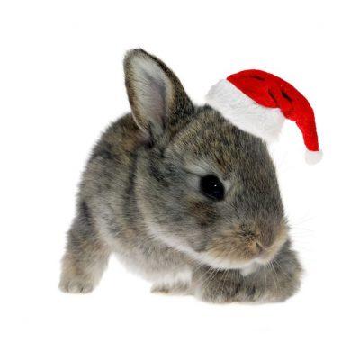 5 Cruelty Free Holiday Gift Ideas