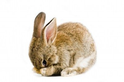 Myths About Animal Testing