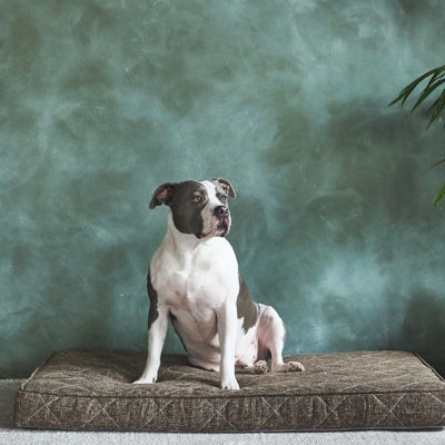 Brentwood Home Pet Bed Review