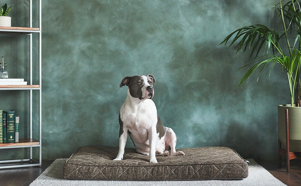 Brentwood Home Griffith Pet Bed Giveaway