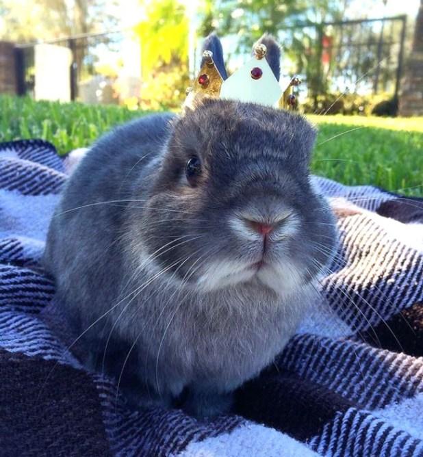 Cooper the Pooper Rabbit