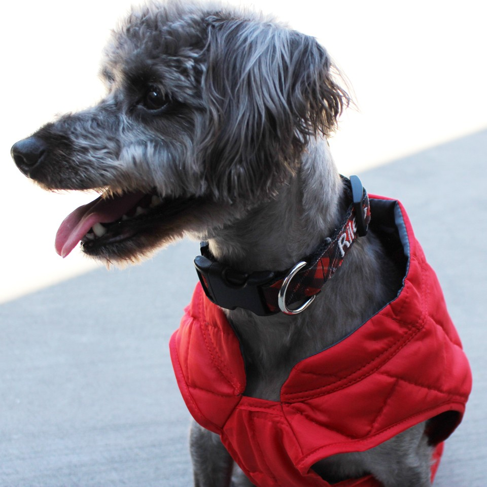 Dog Lovers Holiday Gift Guide - Kurgo Loft Dog Coat