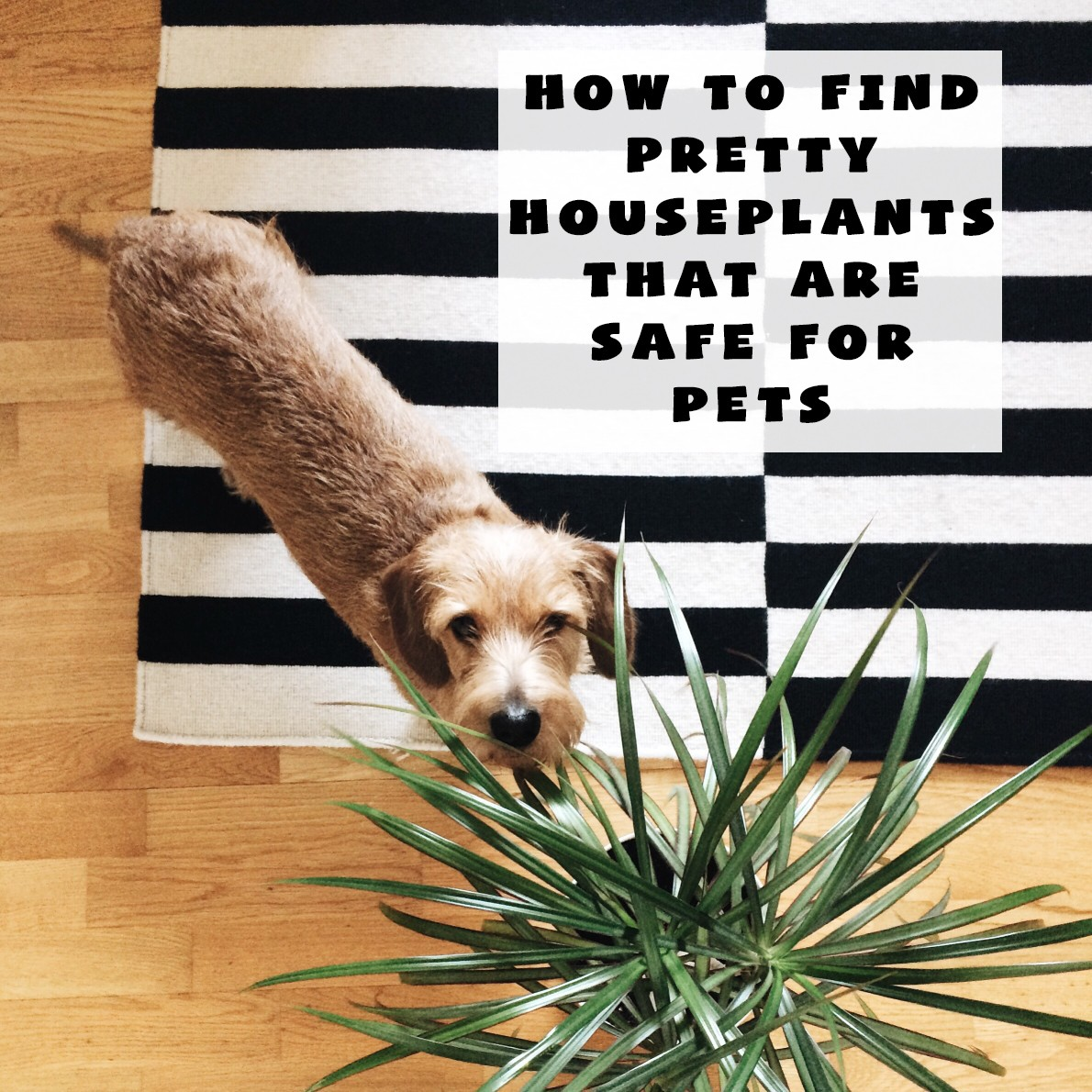 How to Find Pretty Houseplants that are Safe for Pets