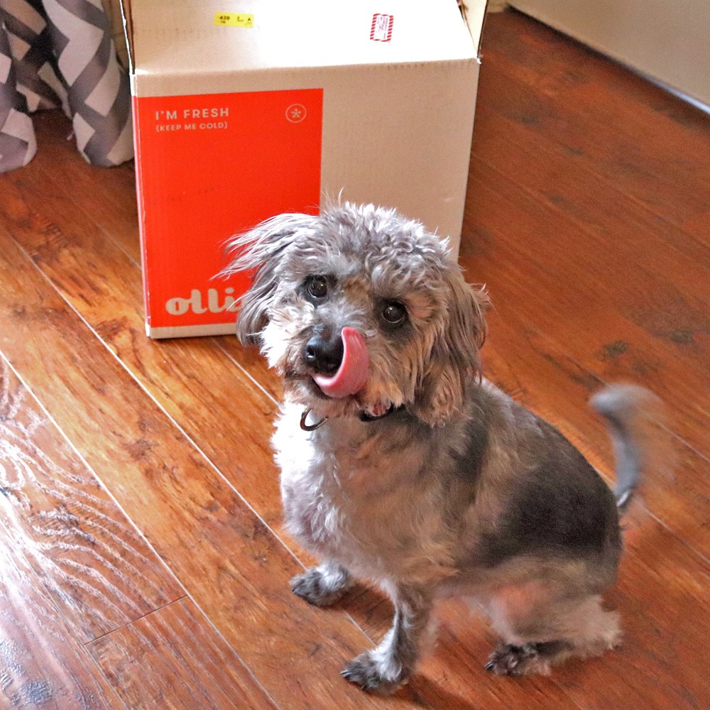 Ollie - fresh dog food delivery service review by pet blogger My Beauty Bunny and Riley Dog