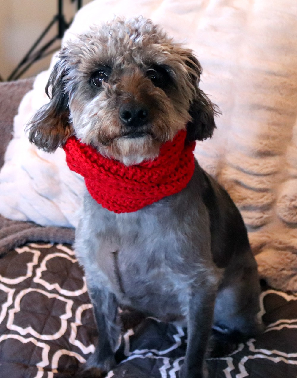 Skarf Dog Scarf Review - Valentines Day Gifts for Pet Lovers by popular Los Angeles cruelty free blogger My Beauty Bunny