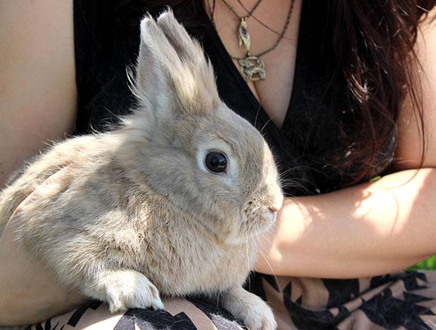 Bunny World Foundation bunny