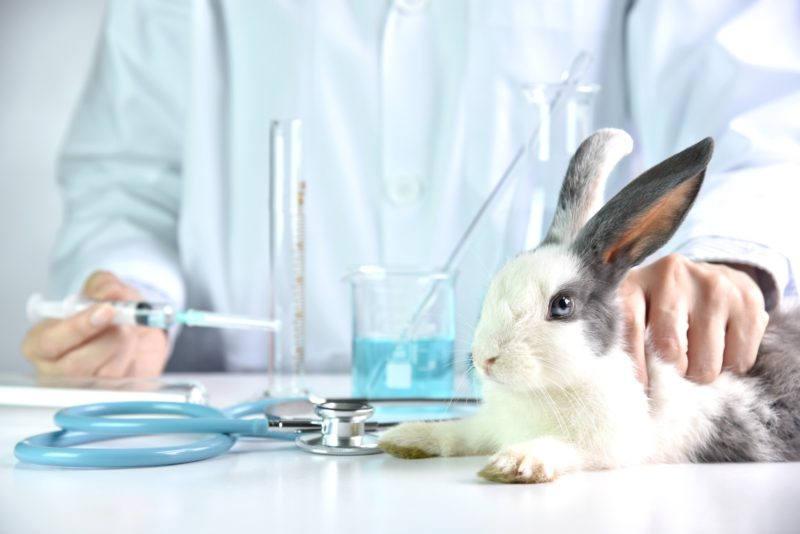 Animal testing in China and abroad