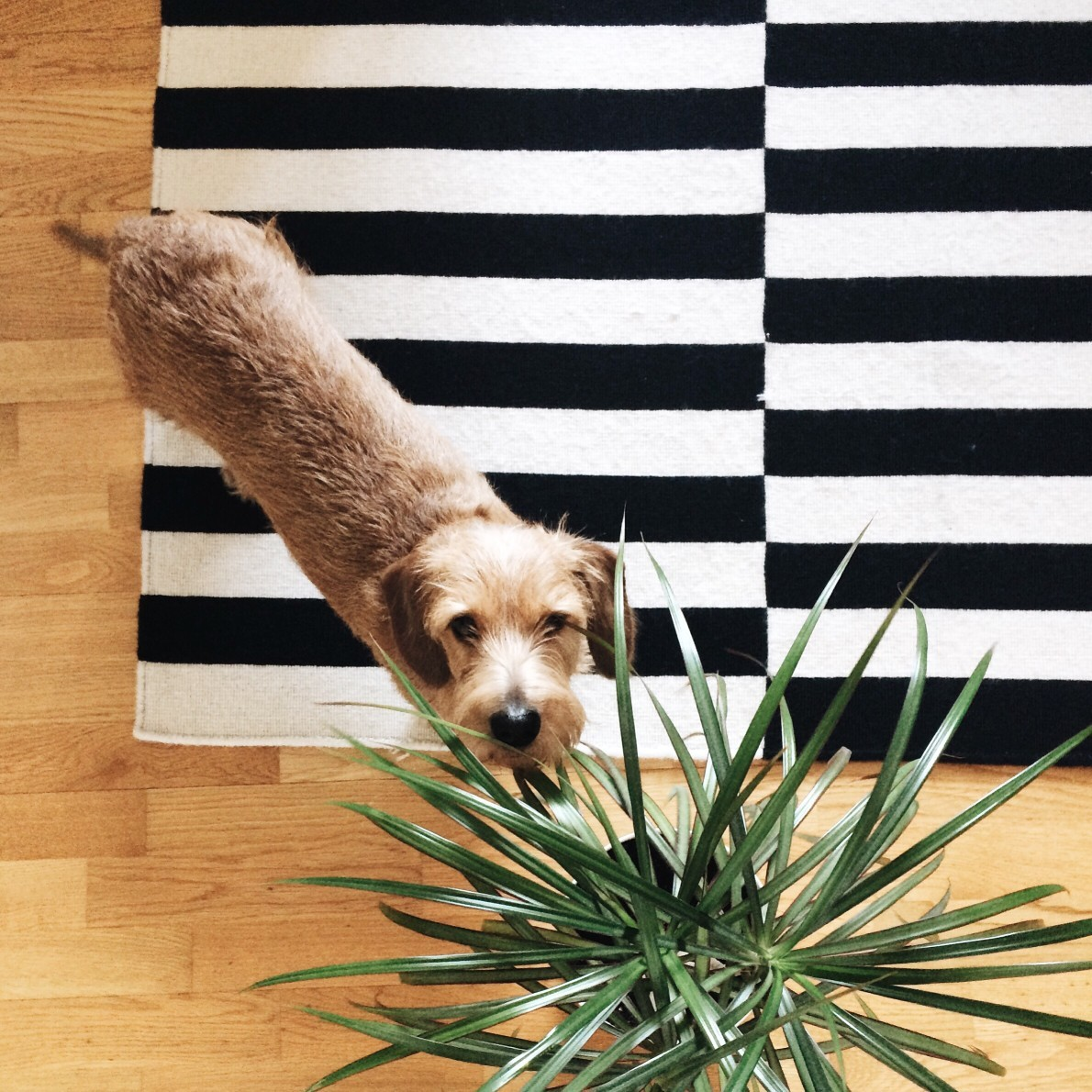 how to find houseplants that are safe for pets