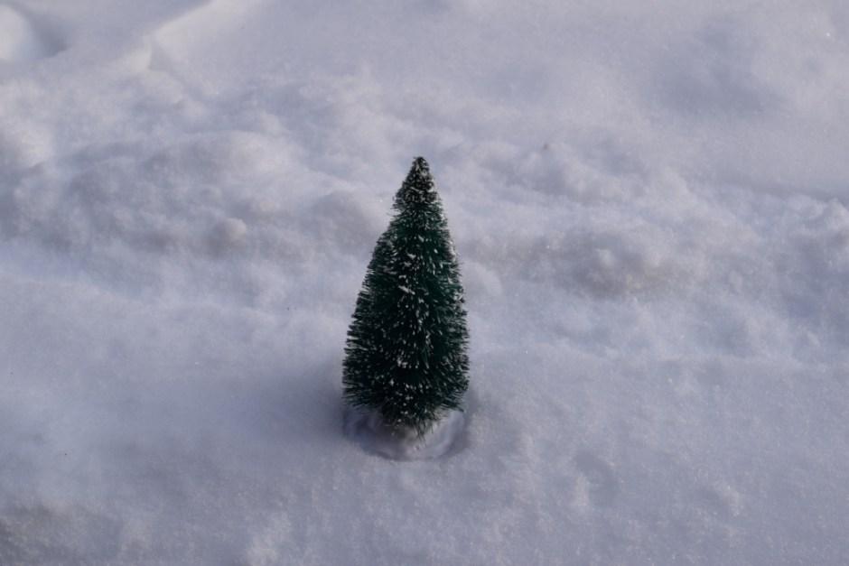 Sapin dans la neige