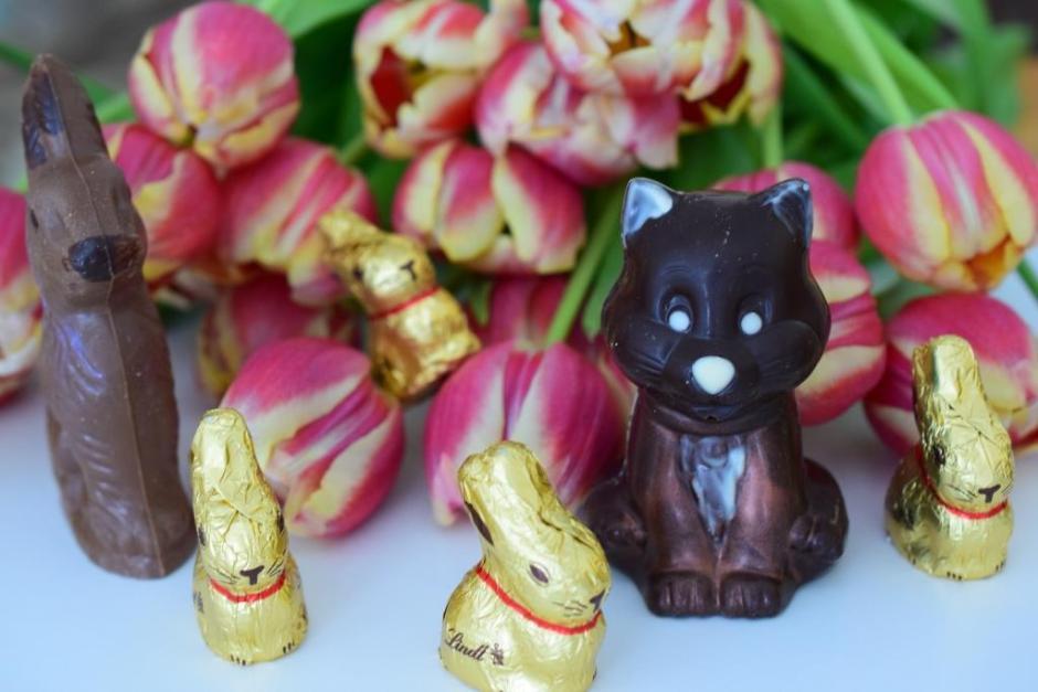 Joyeuses Pâques chat