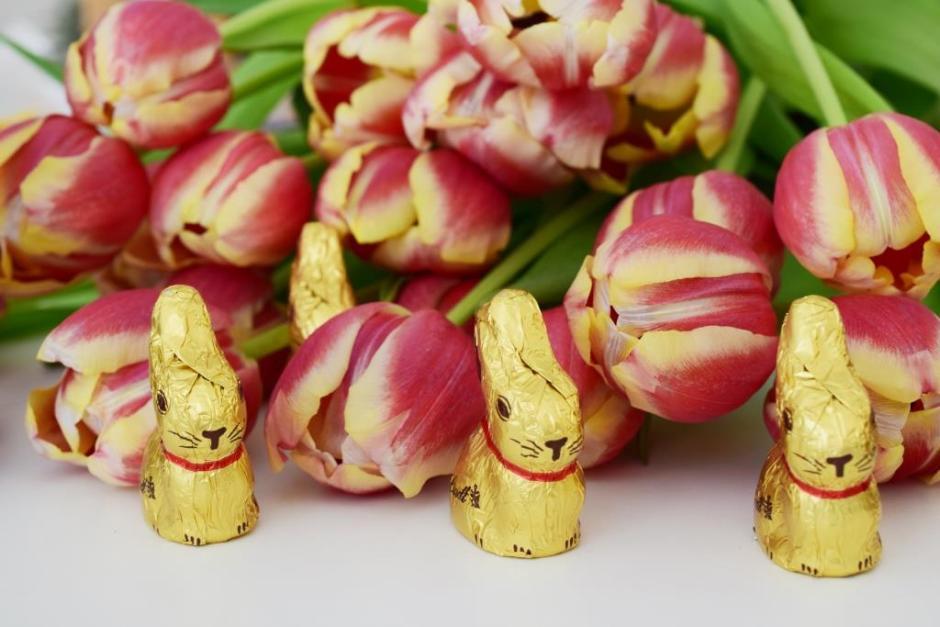 Joyeuses Pâques lapins et tulipes