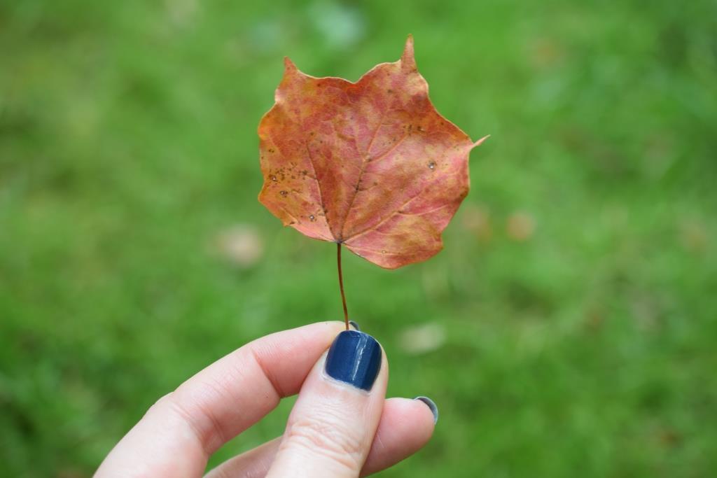 Mes vernis d'automne [défi du lundi]