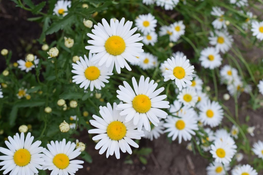Le bonheur rime avec fleur