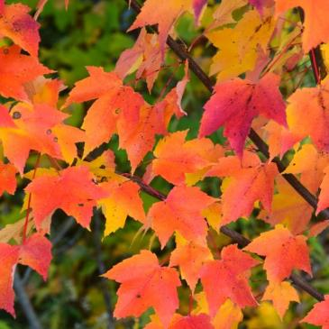 La magie de l'automne