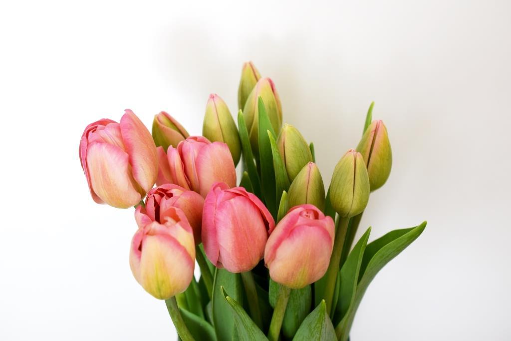 Bouquet de tulipes fraîches