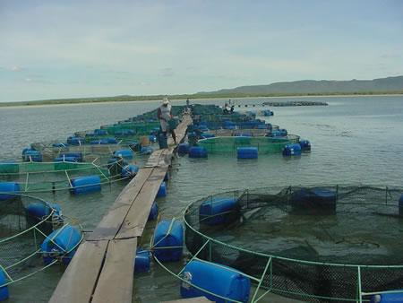 Jovens Produtores Alimentando os Peixes - Os Frutos e Resultadis de Um Treinamento TQLSytems