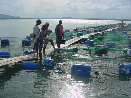 Membros da Associação de Jovens Criadores de Peixe em Tanques-Rêdê de Jatobá Liderados pelo Padre Antonio e Ivone Recebendo Treinamento Intensivo em Aquacultura