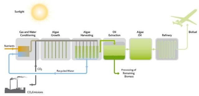 O Processo de Produzir Biocombustíveis Aquícolas (Querosene de Aviaçao) a Partir de Algas