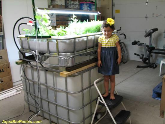 Micro-AquaBioPonics - MABPS System na Garagem e Aziza