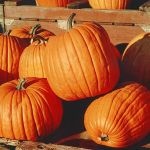 Cooking with Pumpkin - How to Cut and Peel Pumpkin