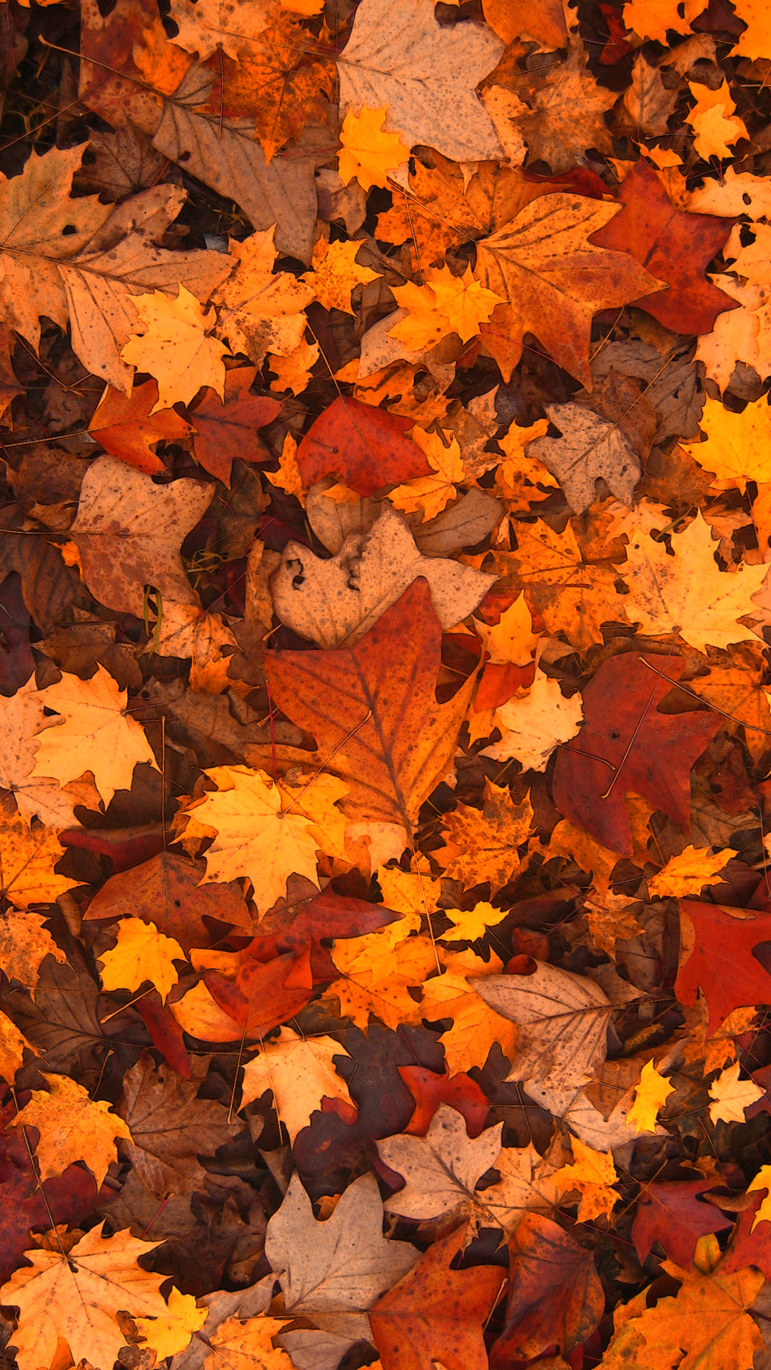 Free Fall Wallpaper For Cell Phones Free Hd Fall Foliage Phone Wallpaper 1113