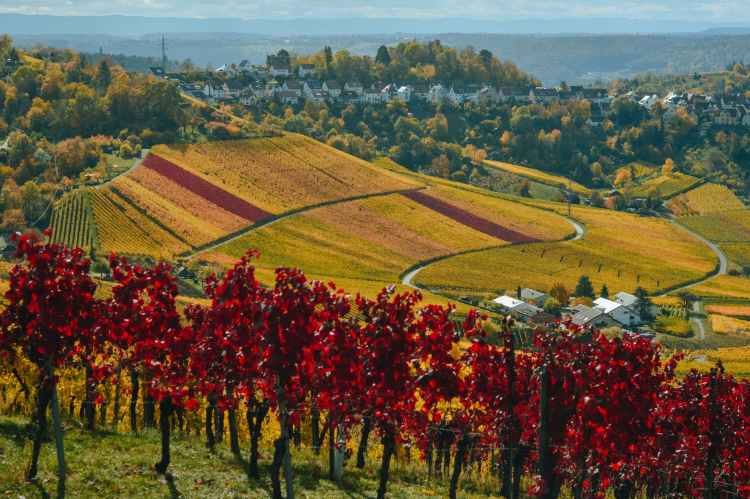 vineyard in picturesque valley with town