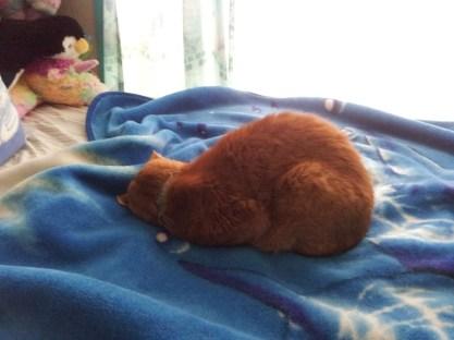 Nap attack!