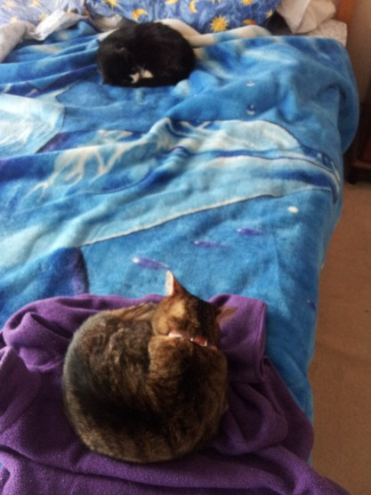 All three again (Garfield is under the blanket)