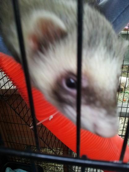 Meet Sid