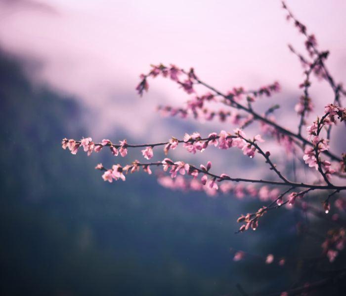 Springing Forward