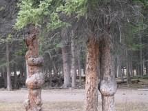 Banff Spray River Bolt- Bio Of Lonely Traveller