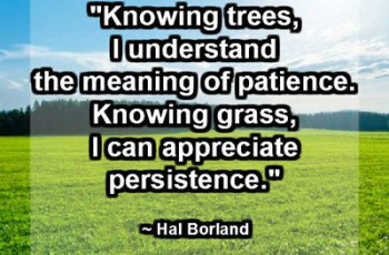 """Knowing trees, I understand the meaning of patience. Knowing grass, I can appreciate persistence."" ~ Hal Borland"
