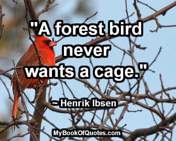 forest-bird