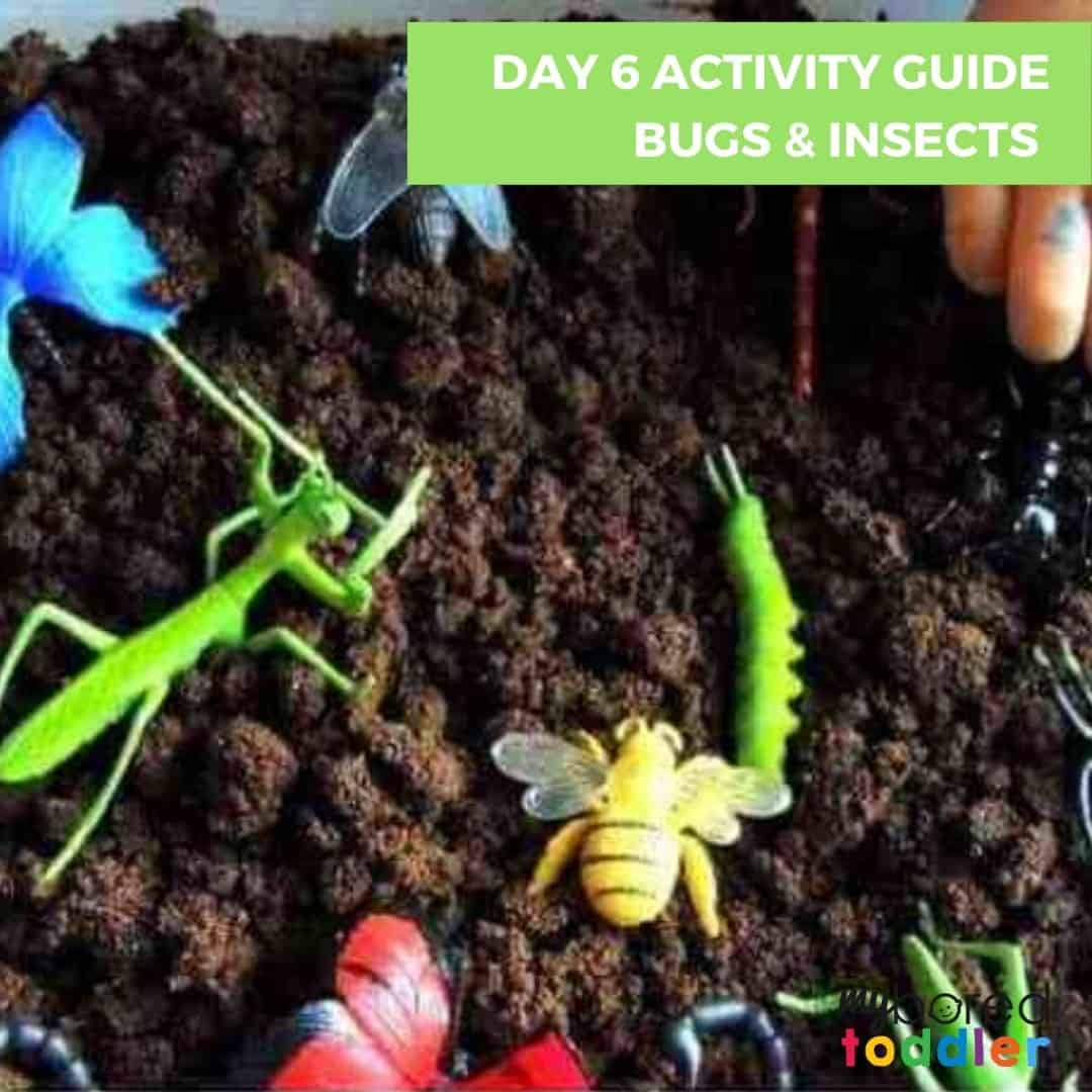 Day 6 Activity Guide Bugs & Insects