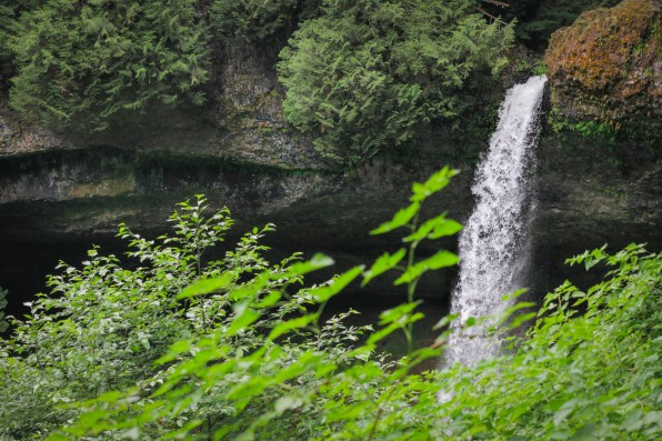 waterfall with greenery